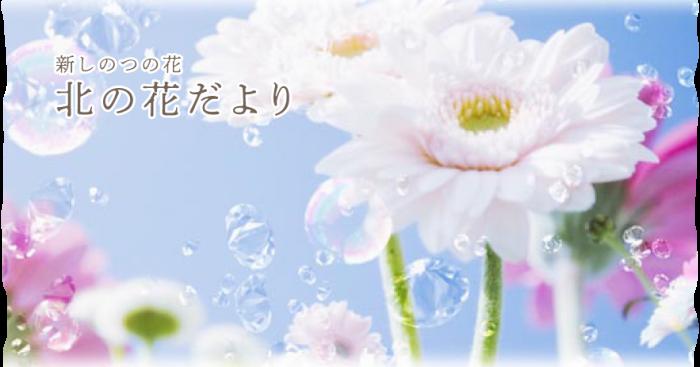 新しのつの花 北の花だより